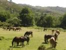 motivos de interesse em Lindoso e no Parque Peneda Geres